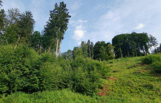 Private Waldbesitzer beraten und begleiten